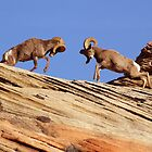 Bighorns Battling in Red Rock Country by A.M. Ruttle