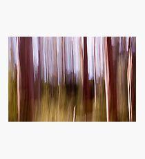 Karri Trees, Margaret River, Western Australia Photographic Print