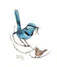 Splendid Wren and Chick by Meaghan Roberts