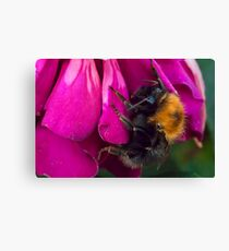 Mr. Bumble Canvas Print