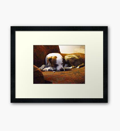 Taking a Snooze after long days work~ Framed Print