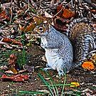 Squirrel!  by VanLuvanee21