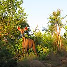 Kudu you think you are..... by irontesh