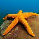 Star on sponge by Andrew Newton