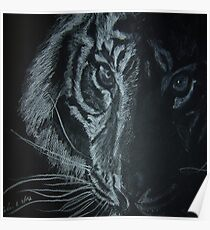 """Tiger"" Poster"