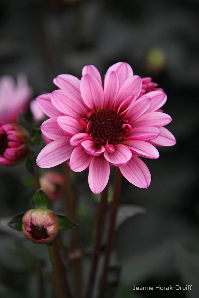 Pink dahlia by Jeanne Horak-Druiff