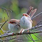 Cute Little Birds! by Anthony Goldman