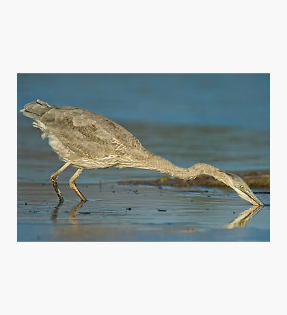 The Heron moved! Photographic Print