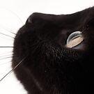 Black Cat by jude walton