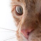 Orange Cat by jude walton