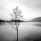 Lonely Tree, Ullswater by Matthew Walters