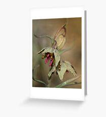 Purpurea Fritillaria Greeting Card