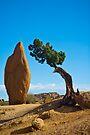 Joshua Tree Sentinals by photosbyflood