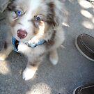 Bi-Color Puppy in the Park by katreneekittel
