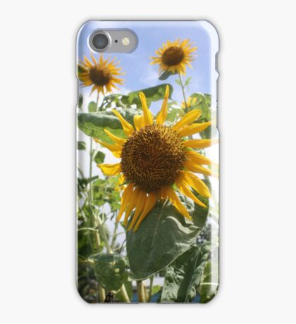 Sunflower iPhone iPod Cover iPhone Case/Skin