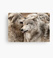 Wolf Pack at Play Canvas Print
