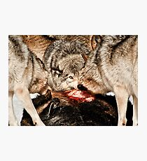 Eye of the Alpha Photographic Print