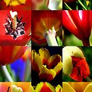 iphone tulips by Deanna Roberts Think in Pictures