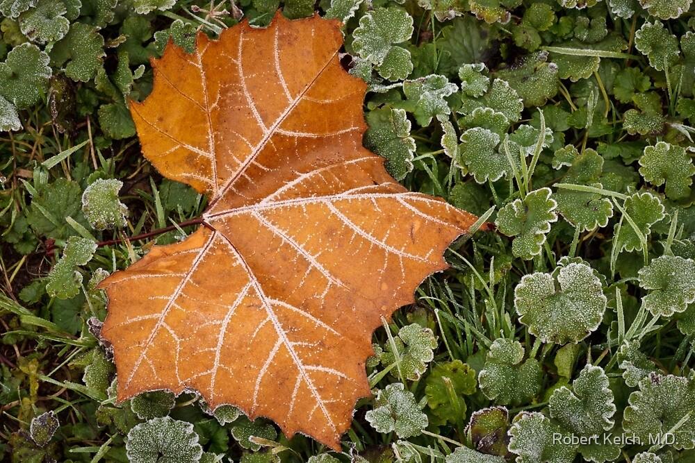 Frosty fall morning by Robert Kelch, M.D.