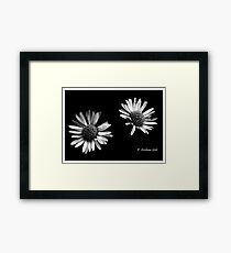 Twin daises in b/w Framed Print
