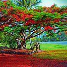 Beneath the Poinciana Tree by jesskato