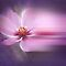 Beautiful Blur ~ Peace Love & Tranquility