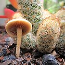 Tiny Fungi & A Cactus by Vanessa Barklay