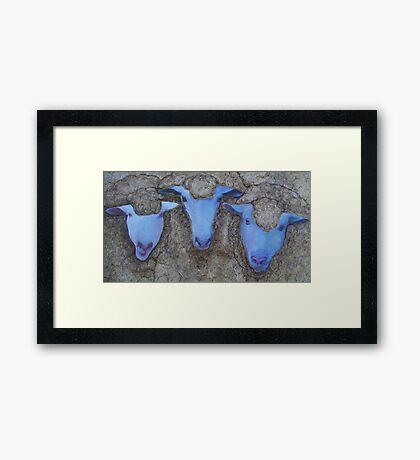 The Three Ewes Framed Print