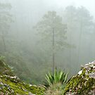 Sierra Norte cloud forest by ecotterell