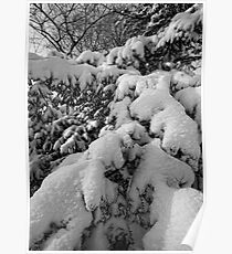 Branches and Snow 1 Poster