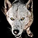 Cry Wolf by David  Preston