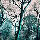 winter trees by Ilapin