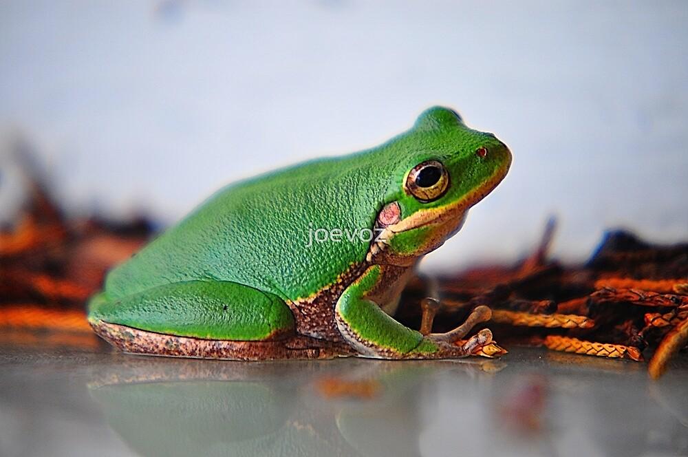 Little Frog by joevoz