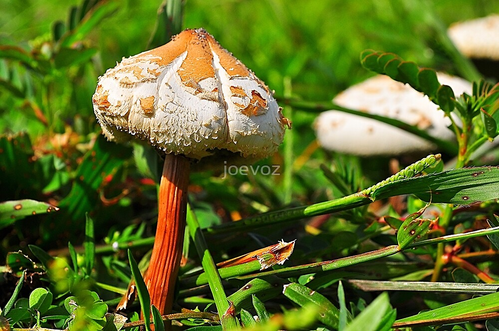 Two Mushrooms by joevoz