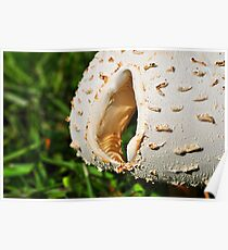 Mushroom Cap with Hole Poster