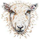 Sheep by KarenJI1962