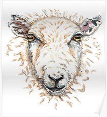 Sheep Poster