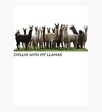llamas  Photographic Print