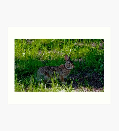 Peter Cottontail Art Print