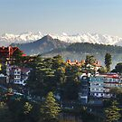 Shimla and the Himalayas by Skye Hohmann