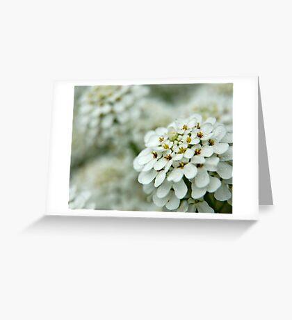 Alyssum Greeting Card