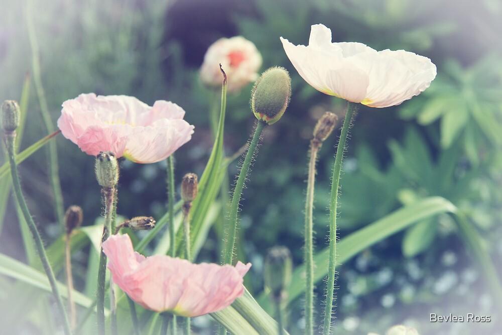 Poppy Haze by Bevlea Ross