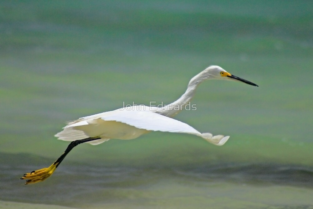 Flight of the Egret by John Edwards