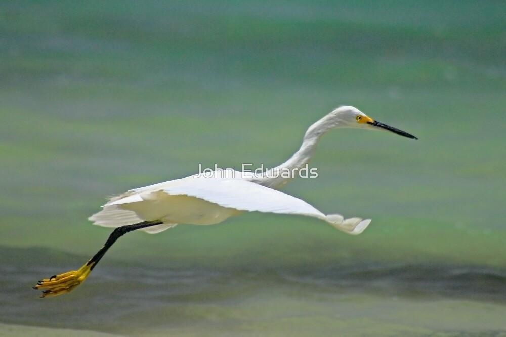 Flight of the Egret by John Edwards