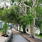 Silver gum trees by the Yarra river by Maggie Hegarty