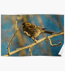 Song Bird in Winter Frost by Donna Ridgway Poster