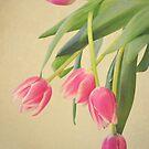 Tulips by Vintageskies
