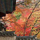 Autumn Leaves behind Temple Wall, Bulguksa by Jane McDougall