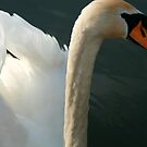 Swan 1 by Jenny  Riley