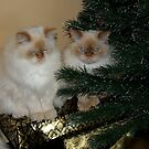 We hide all the ornaments under the sofa  by katpartridge